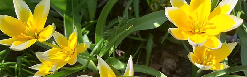 Kaipauksen pääsiäinen